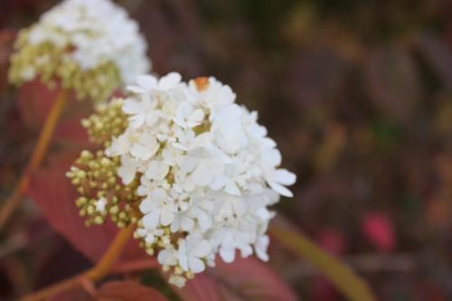 Fall Flower (1)