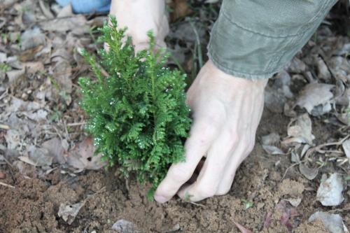 Planting Tree (1)