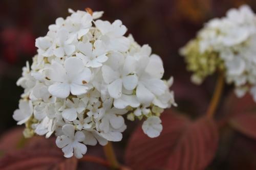 Fall Flower (2)