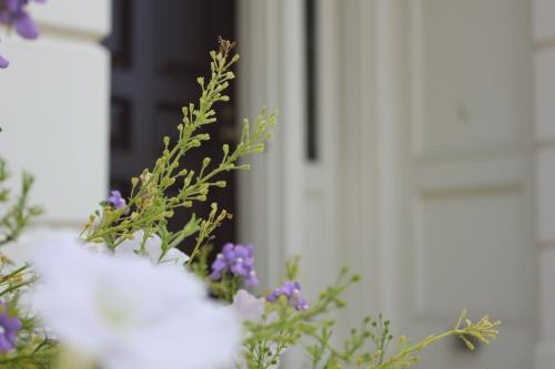 Front Door Flowers (1)