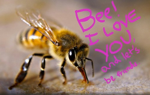 Love note to a bee